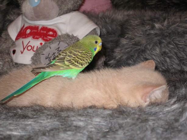 Parrot & Cat