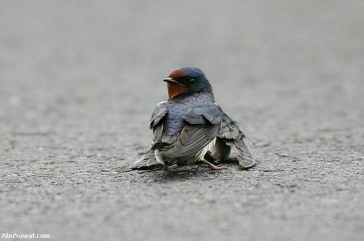 Love of Swallow..............MUST SEE