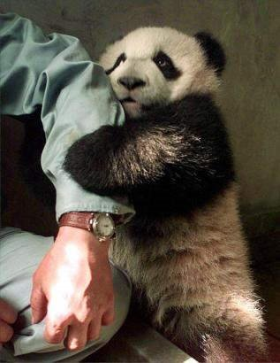 These pets are soooo cute... check out the baby panda in the last pic