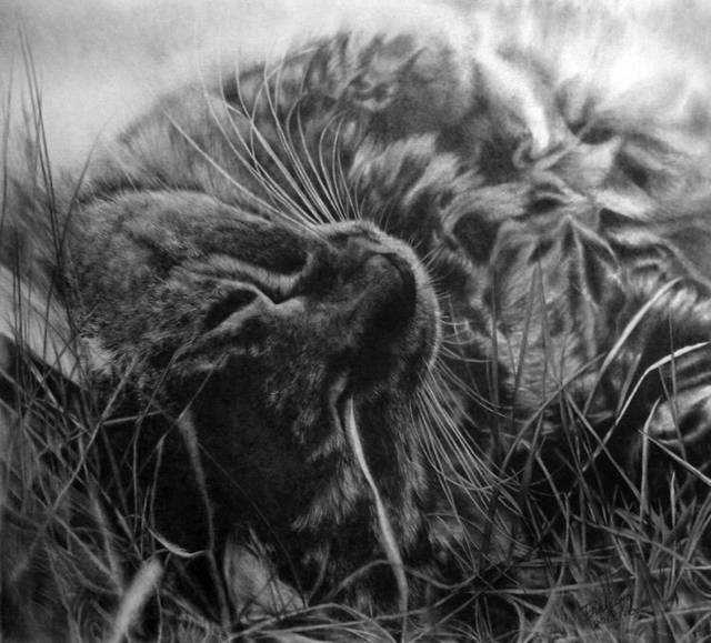 Unbelievable Pencil Drawings by Paul Lung