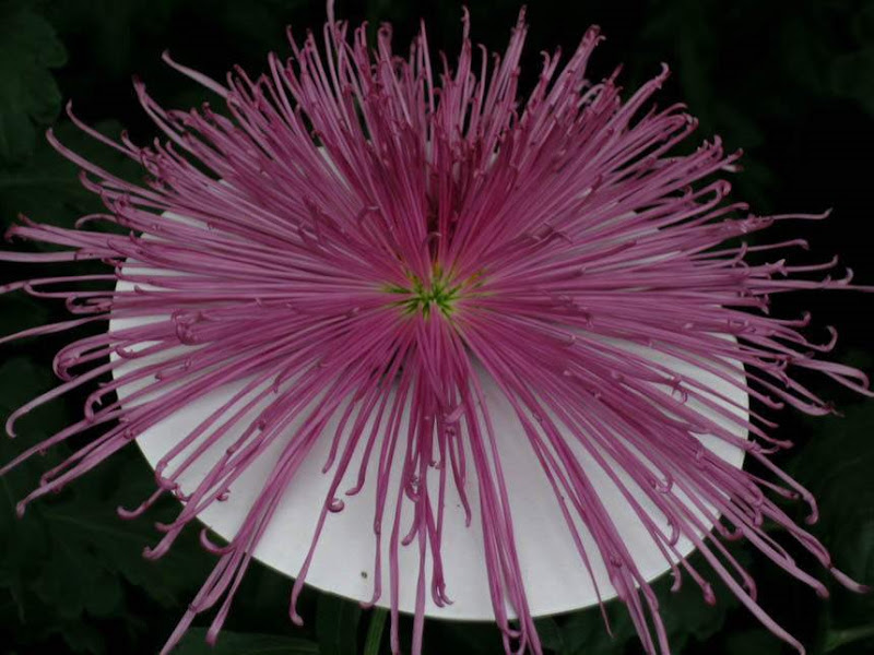 Flowers with a difference... These 10 photos are of Real flowers!