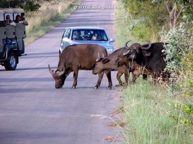 Up Close, Adventurous and Dangerous: Animal Safari