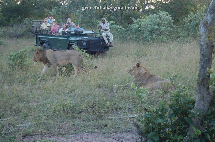Up Close, Adventurous and Dangerous: Animal Safari