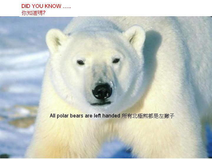 Did you know these interesting facts? BTW, did you know that all polar bears are left handed?
