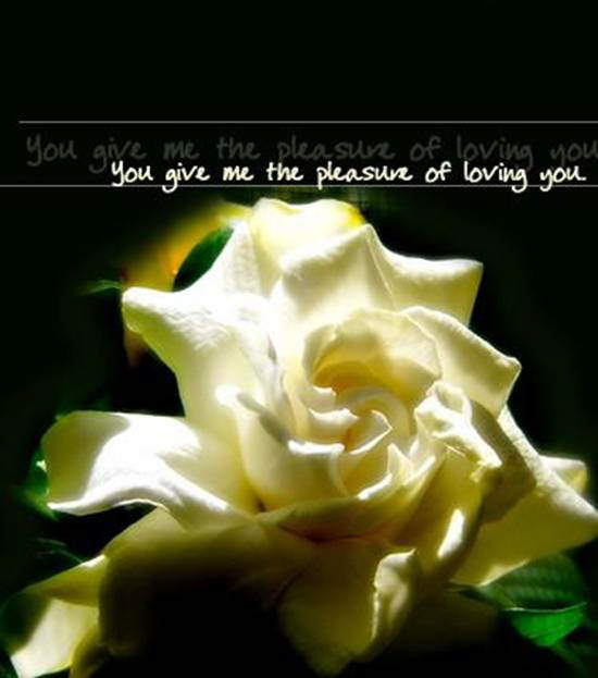 Love: You give me the pleasure of loving you!
