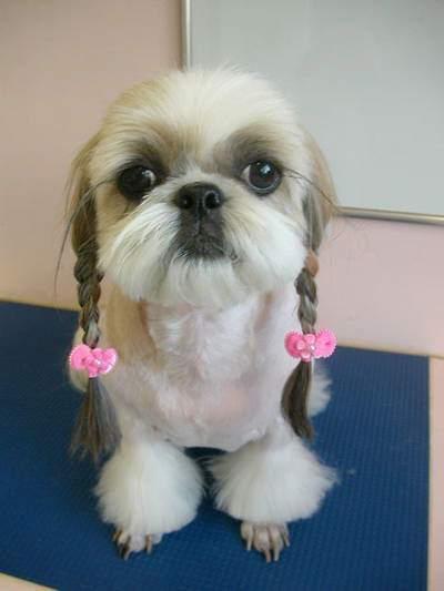 Pet's Hair Style 2009