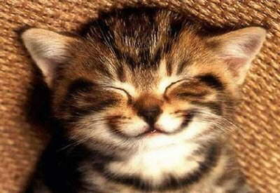 Start your day with a smile, it does not cost you anything. A collection of million dollar smile photos!