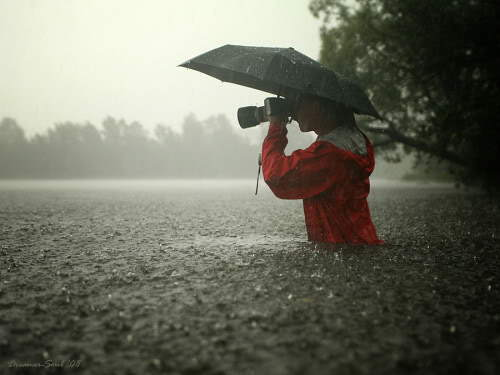 Really Lovely Rain Photography