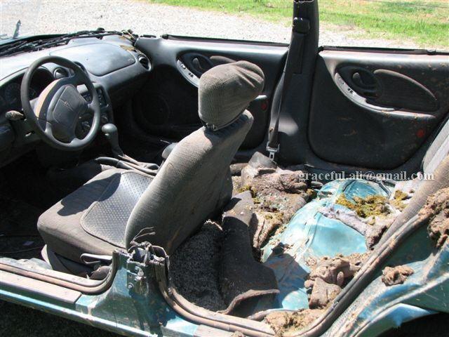Amazing Travel: Ox Car