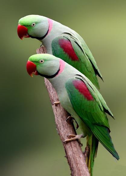 Colorful World of Parrots