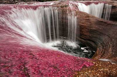 Cano Cristales River... The Most Colorful River In The World