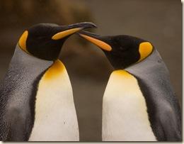 2008-Antarctica-556x
