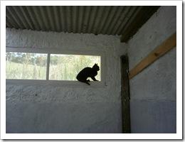 Granja Florestal - Cres-Sendo 02 11 026