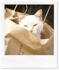 branco sacola