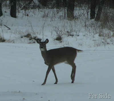 Best deer Photo this week Dec 03