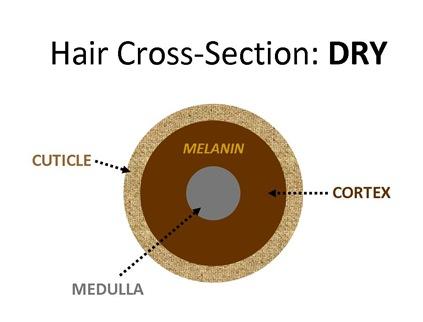 HairXDry