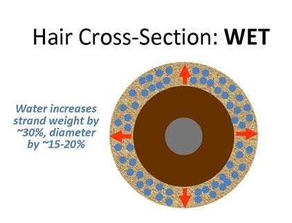 HairXWet