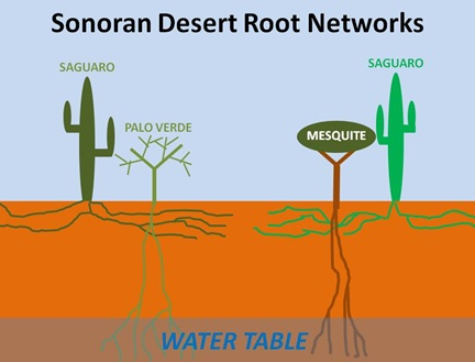 Sonoran Root Networks