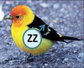 Bird ZZ