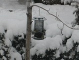 Goldfinch feeder 12 26 08