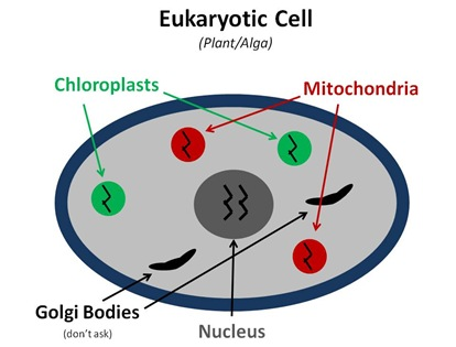 Eukaryotic Cell