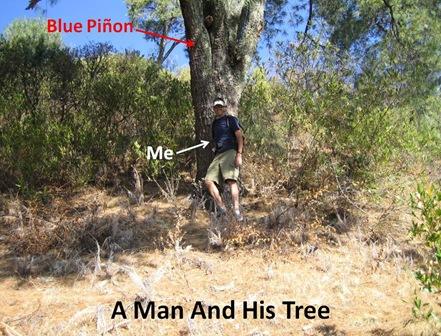 Me Tree C Pinones 2 24 06