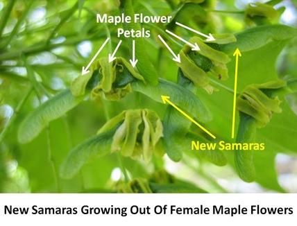 New Samaras