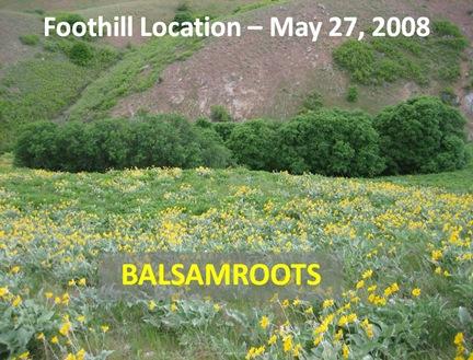 Balsamroot Foothills