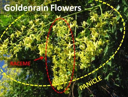 GRain Flowers