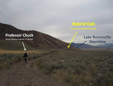 PChuck Hybrid
