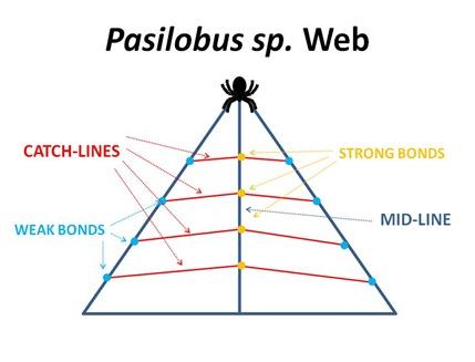 Pasilobus Web3