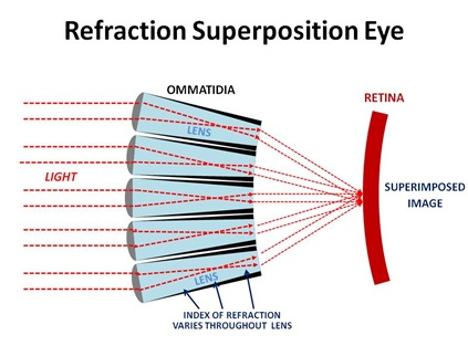 Refraction Graphic