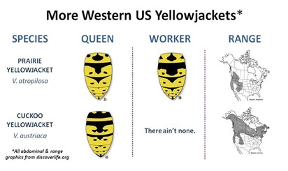 More Western US YJ Species