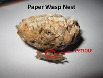 PWasp Nest