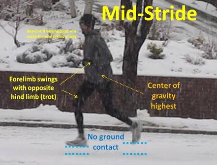 Mid-Stride