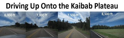 Driving Up Kaibab