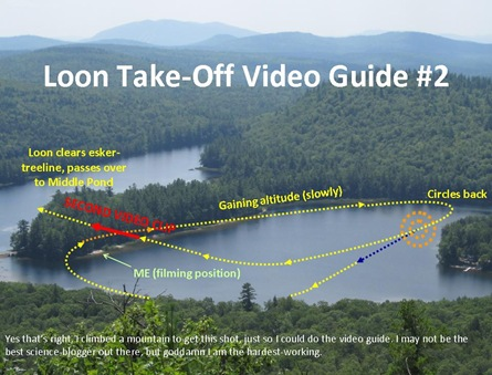 Loon Video Guide2