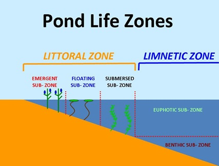 Littoral Graphic