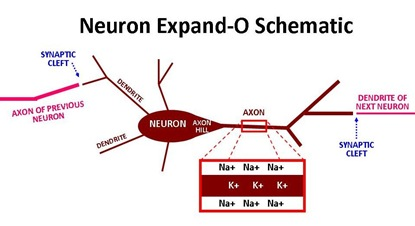 Neuron Expand-O