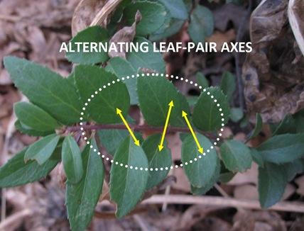 Leaf Axes