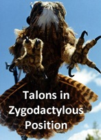 Zygo Talon caption