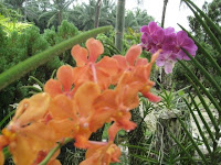 two-orchids.jpg