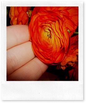 Orange and WHite 014