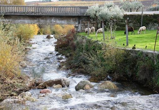 Castelo Novo - Ponte da entrada da aldeia - ribeira da Alpreada