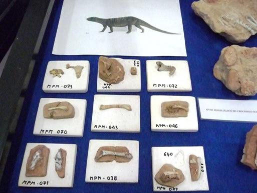 11. restos ósseos do Mariliasuchus encontrados em Marília