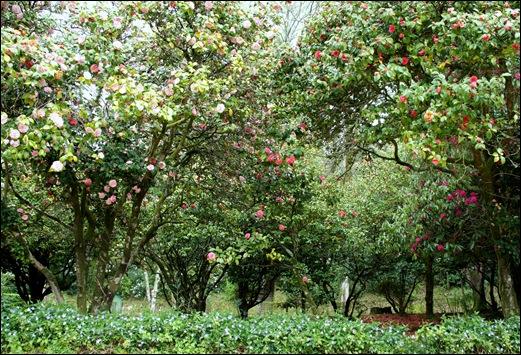 Buçaco - jardim do palácio 13