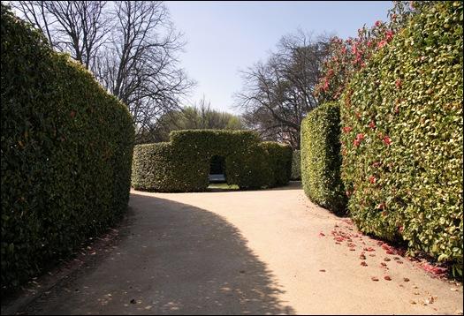 jardim serralves  - paredes de camélias