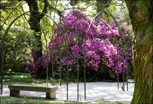 jardim serralves - azaleias