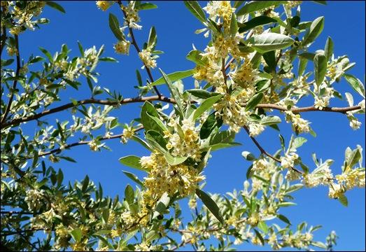 flor - groselha 3 - Glória Ishizaka