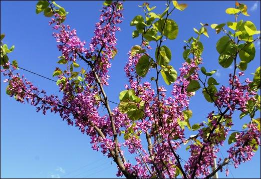 Linhares - flores 2